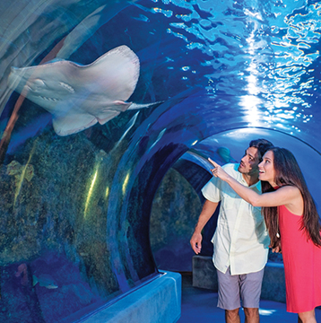 Receive 15% Off Admission, Dining & Gift Shop at Maui Ocean Center in Hawaii!