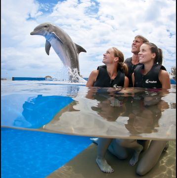 Save 15% on Special Visa-Excursion at Marineland in Florida – Swim with Dolphins, Kayak Tour + More!