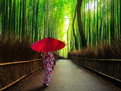 Kyoto x Voyagin